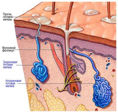 Лечение первичного аксиллярного гипергидроза с использованием микронидлинга Fractoradry на аппарате INMODE